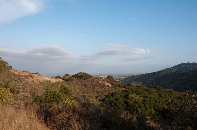 Rhus Ridge