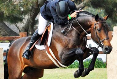 Woodside horse rider