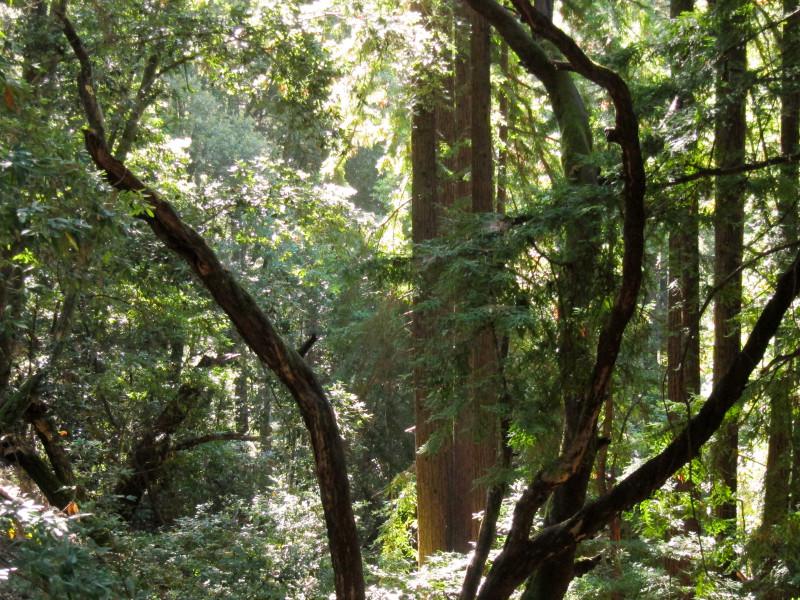 Wunderlich Park in Woodside